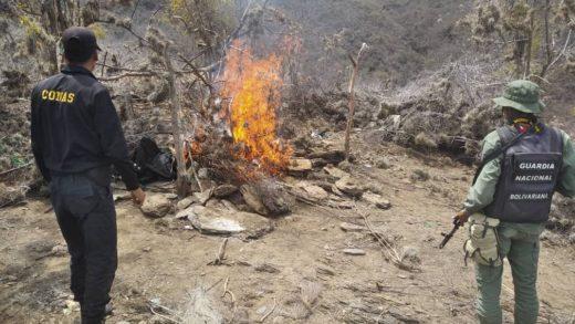 GNB de Nueva Esparta destruye campamentos de irregulares en cerro El Pitigüey