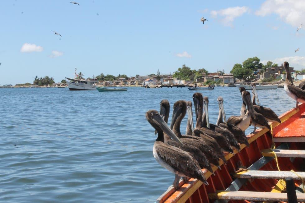 Implementan acciones de seguridad en el mercado municipal del Pescado