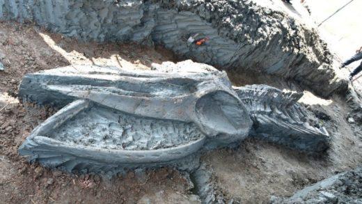 Descubren en Tailandia un esqueleto casi intacto de una ballena de al menos tres mil años (+Fotos)