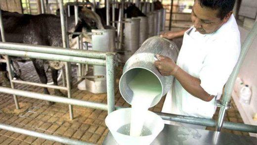 Industria láctea opera entre un 15% y 20% de su capacidad instalada en Venezuela