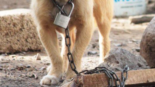 Se entrega a la Policía de Trujillo, alguacil señalado de maltrato animal