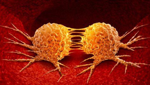 Descubren que células cancerosas pueden hibernar como los osos para sobrevivir a la quimioterapia
