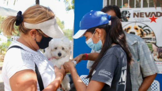 Ámbito Bienestar Animal será incorporado al Plan 200 Carabobo en Nueva Esparta