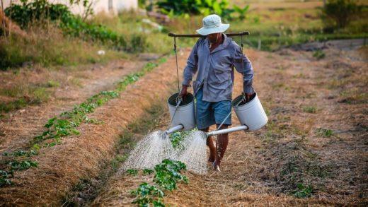 Ejecutivo regional brinda apoyo a campesinos en El Dátil