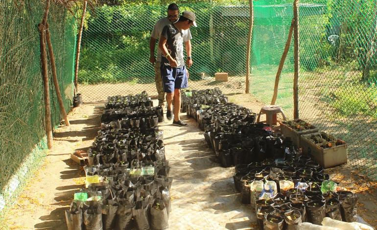 Provita anunció la reactivación de siete viveros comunitarios en la península de Macanao